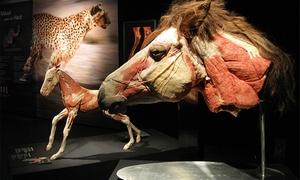 """3Landesmuseen: 2 Tickets für die Ausstellung """"Körperwelten der Tiere"""" Braunschweig vom 01.02. bis 06.03.2016 (38% sparen)"""