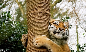 Dartmoor Zoological Society: Zoo Entry for Two Adults, an Adult and a Child or a Family of Four at Dartmoor Zoological Society (Up to 64% Off)