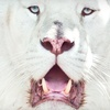 Half Off Wild-Animal Tour