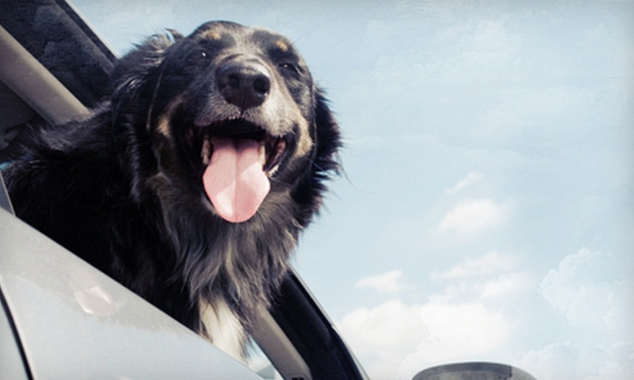 Happy Bays Car & Dog Wash - Happy Bays Car & Dog Wash: Two Car Washes, Two Dog Washes, or Two of Each at Happy Bays Car & Dog Wash (Up to 52% Off)