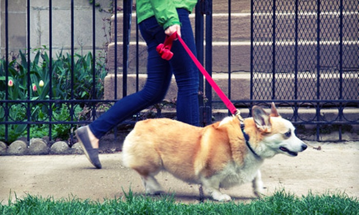 Sara M. Scott - Tysons Corner: Three or Five Dog Walks or One Month of Walks for a Small Dog from Sara M. Scott (Up to 52% Off)