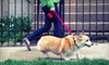 Sara's Little Dogs: Three or Five Dog Walks or One Month of Walks for a Small Dog from Sara M. Scott (Up to 52% Off)