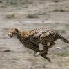 51% Off Eight-Day Photo Safaris in Tanzania