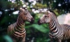 Safari Wilderness Ranch - Country Trails: Safari and Lemur Feeding for One or Two at Safari Wilderness Ranch (Up to 50% Off)