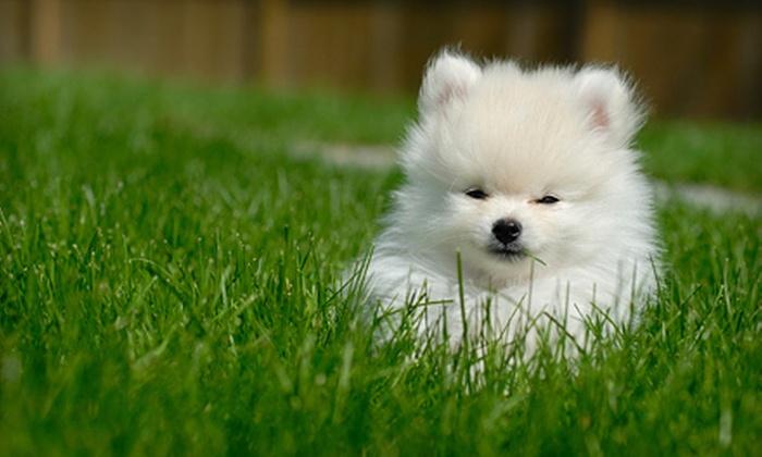 Waikiki Dog Grooming - Waikiki: $10 for $30 Worth of Dog Bathing or Grooming Services at Waikiki Dog Grooming