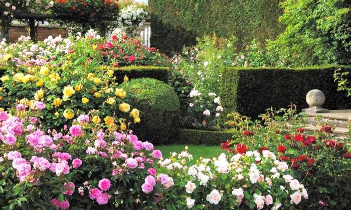 Plantes et outils livr s chez soi jardinerie derly groupon for Achat jardinerie