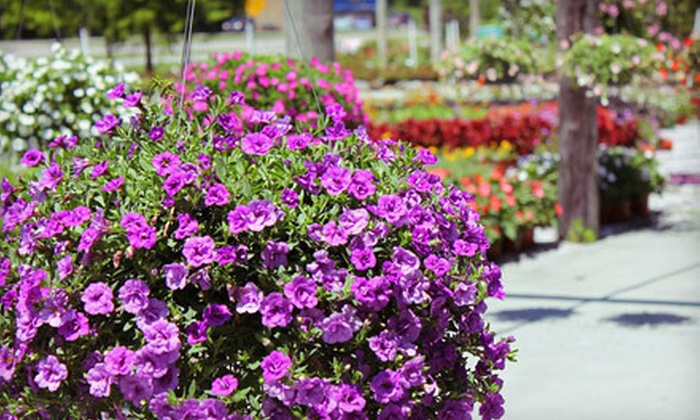 Floral Tree Gardens - Multiple Locations: Plants at Floral Tree Gardens (Half Off). Two Options Available.