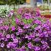 Half Off Plants at Floral Tree Gardens