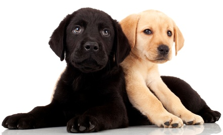 $75 for an Annual Pet Checkup with Vaccinations and Dental Exam at Pets First Animal Hospital ($190 Value)