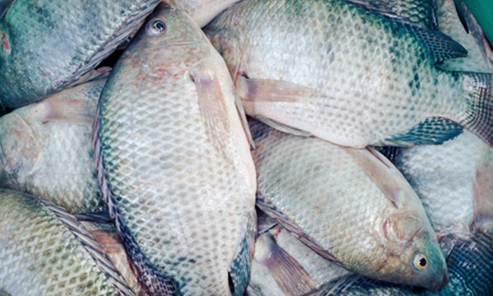 Inland Ocean - New Smyrna Beach: Fresh Red Fish or Tilapia, or Catch-and-Release Fishing for One Adult at Inland Ocean (Half Off)