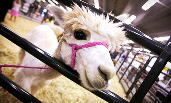 Denver County Fair - Denver: Three-Day Admission for Two or a Family of Four to the Denver County Fair on August 9, 10, and 11 (Up to Half Off)
