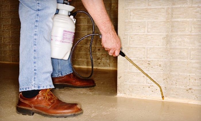 Spidex Pest Control - Boise: Interior or Exterior Pest Control Treatment or Both from Spidex Pest Control (Up to 81% Off)
