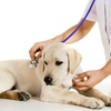 59% Off Vet Exam with Microchip