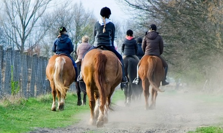 Beginner Trail Ride for One or Two from Carousel Horse Farm (Up to 57% Off)