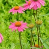 Up to Half Off Gardens on Tour for One or Two