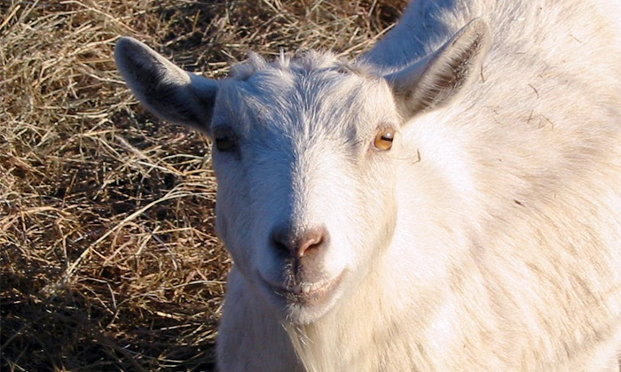 Country Critters Farm - Alvarado: Weekend Visit for Two, Four, or Six to Country Critters Farm (50% Off)