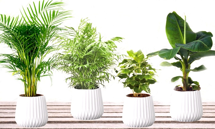 Set di 4 piante da interni groupon goods - Piante da interno resistenti ...