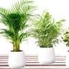 Set di 4 piante da interni