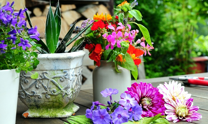 Barone Garden - Renton: Garden Decor or Fountains at Barone Garden (Up to 50% Off)