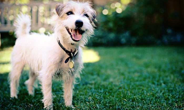 WoofWorld - Allentown City Historic District: Dog Daycare for Three or Five Days or Boarding for Three or Seven Nights at WoofWorld (Up to 74% Off)