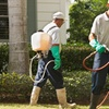 45% Off Pest Control from Green Kiss Pest Control