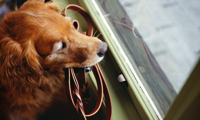 Zen Dog Walking - Seattle: Three 15- or 30-Minute Dog Walks or Five 30-Minute Dog Walks for One Dog from Zen Dog Walking (Up to 52% Off)