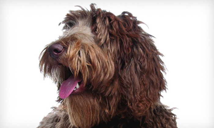 Hair of the Dog Wash and Groom Salon - Old Seward / Oceanview: $25 for $50 Toward Nose-2-Tail Dog Grooming Package at Hair of the Dog Wash and Groom Salon