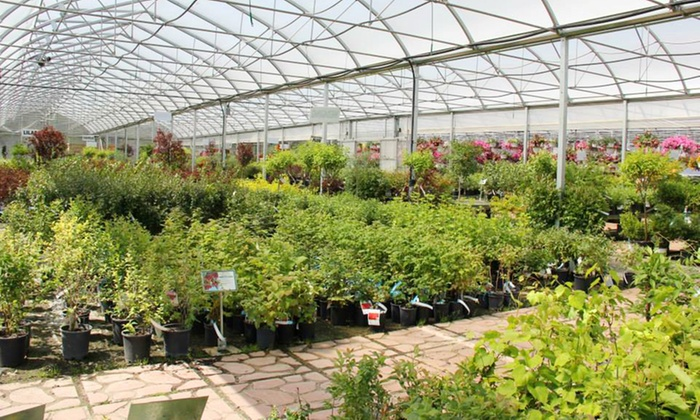 Cannor Nurseries - Spruce Grove: Trees, Shrubs, Plants, and Gardenware at Cannor Nurseries (50% Off). Two Options Available.