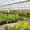 50% Off Trees and Plants at Cannor Nurseries