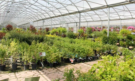Trees, Shrubs, Plants, and Gardenware at Cannor Nurseries (50% Off). Two Options Available.