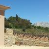 Dégustation de vin et visite du vignoble