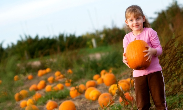 Fields Of Adventure - Silver Spring: Harvest Park Admission Plus Pumpkin Picking and Corn Mazes for Two or Four at Fields Of Adventure (Up to 52% Off)