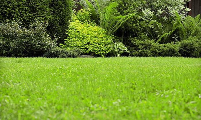 ProLawns - Indianapolis: Drought Relief Lawn Aeration for 1/4 or 1/2 Acre from ProLawns (Up to 75% Off)