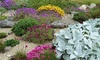 Up to 12 Alpine Collection Plants