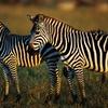 50% Off Admission to Lazy L Safari Park