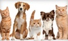 Canine & Feline Concierge - Tempe: 5 or 10 Daily, 30-Minute Pet-Care Visits from Canine & Feline Concierge (Up to 55% Off)