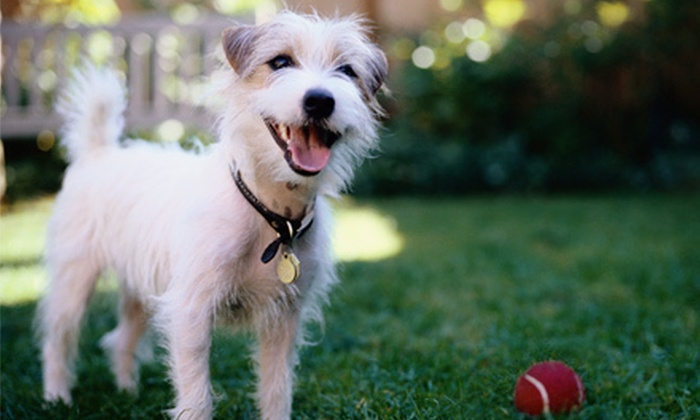 Green Paws Unlimited - Grand Rapids: Dog Lodging for One, Two, or Five Nights or One Day of Dog Care at Green Paws Unlimited (Half Off)