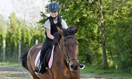 4 u 8 clases de iniciación a la equitación desde 24,90 €