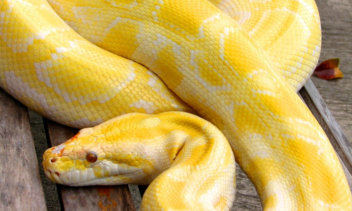 Snakehead Ed - Indianapolis: $115 for a 45-Minute On-Location Party with Snakes or Critters from Snakehead Ed ($250 Value)