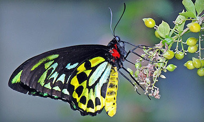 The Butterfly Place - Westford: $12 for a Spring or Fall Admission for Two at The Butterfly Place in Westford (Up to $24 Value)
