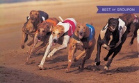 Sunderland Dogs: Saturday Night at the Races with Pie, Drinks and Disco, Entry for Two or Four, 18 March - 24 June