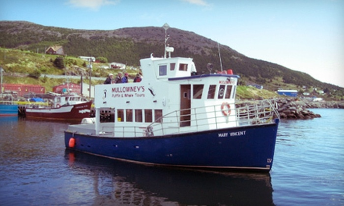 Mullowney's Boat Tours - St. John's: Puffin- and Whale-Watching Tour for Two or Four from Mullowney's Boat Tours (Half Off)