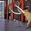 Up to 47% Off Museum Visit or Membership
