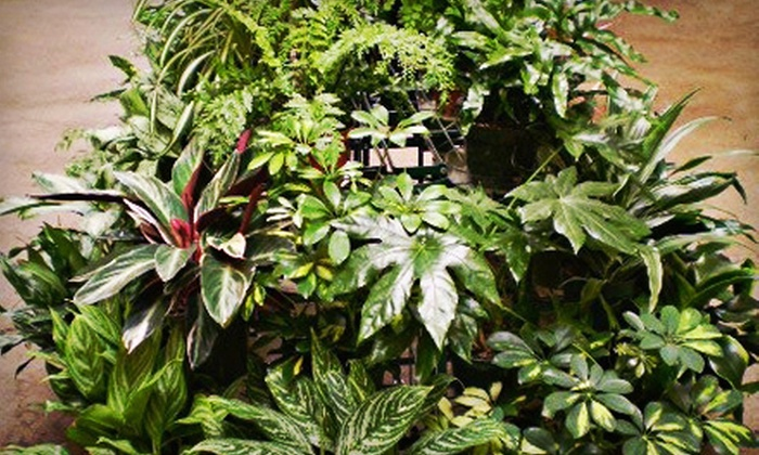 The Garden House - Hayward Park: $15 for $30 Worth of Indoor Plants at The Garden House in San Mateo