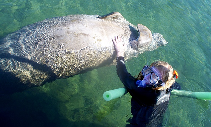 Nature Coast Manatee Tours - Homosassa: $175 for a Four-Hour Private Manatee Tour for Up to Six on a Houseboat at Nature Coast Manatee Tours (Up to $350 Value)