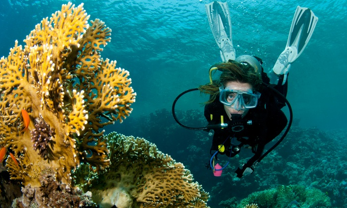 Speakes for Scuba Diving - Tower District: $350 for a Certification Course from Speakes for Scuba Diving ($500 Value)