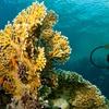 20% Off Scuba-Diving Certification
