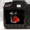 86% Off Digital-Photography Class
