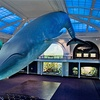 American Museum of Natural History – Up to 51% Off Membership
