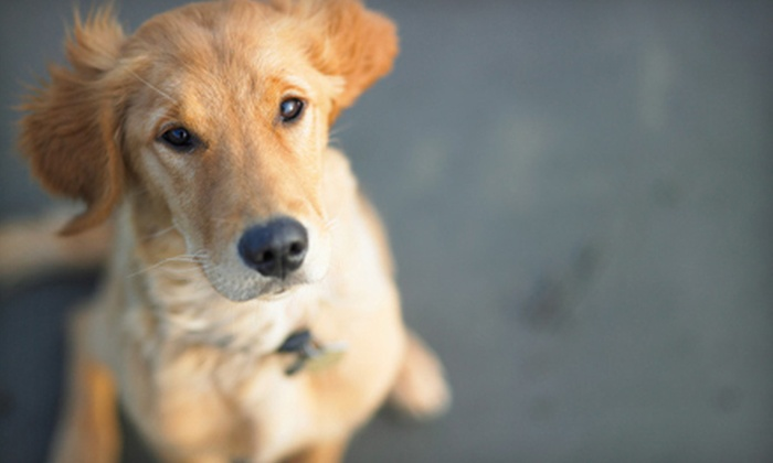 Crown Valley Animal Care - Multiple Locations: Three Nights of Dog Boarding or Dog Bathing (Up to 56% Off). Five Options Available.